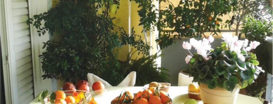 Φροντίδες των φυτών στον κήπο και το μπαλκόνι το χειμώνα
