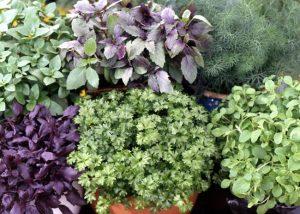 herbs-plants
