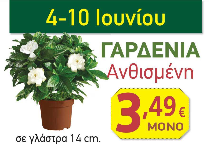 prosfora-gardenia